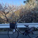自転車通勤始めました!