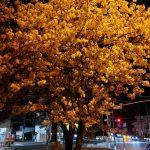 いつもの街路樹!?!?
